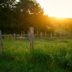 farm and ranch fencing